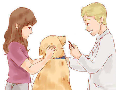 ticks-remove-from-dogs-procedure-1