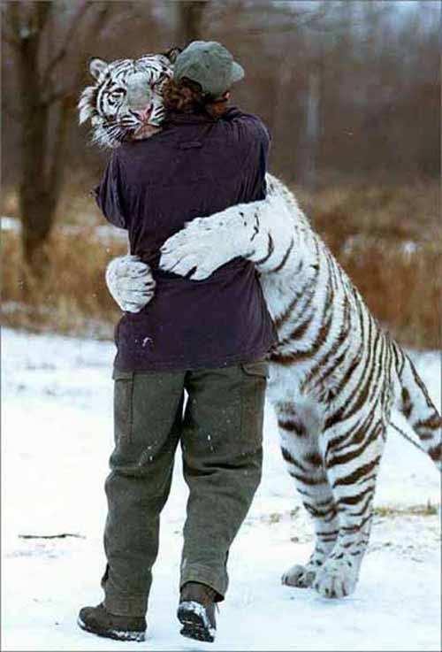 tiger-hugging-man
