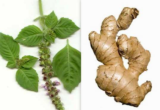 Tulsi-and-Ginger