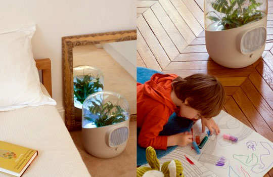 purify-indoor-air-naturally-lifestyle-5